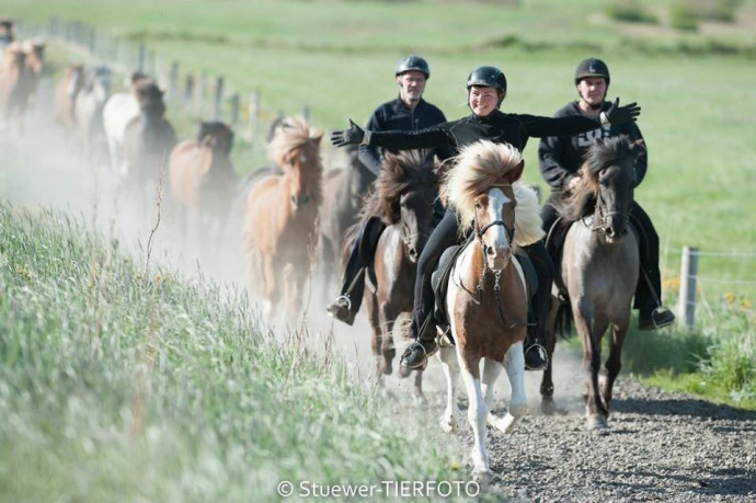4-horse_rental_sydraskordugil
